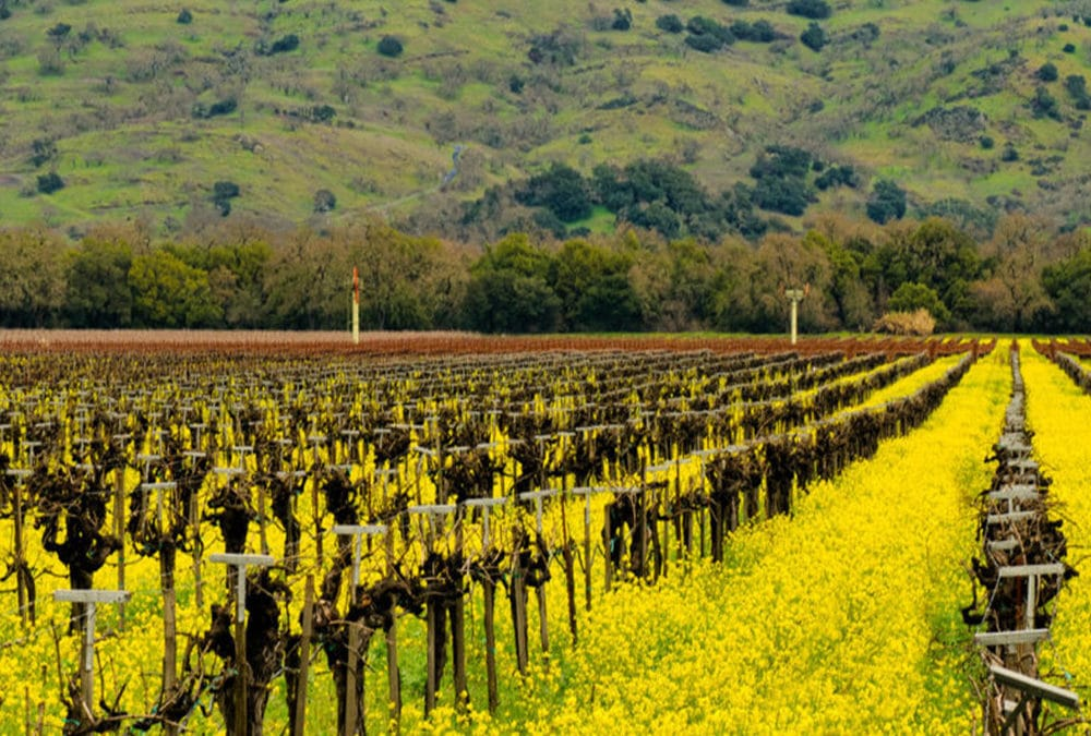 February Events in Yountville and the Napa Valley